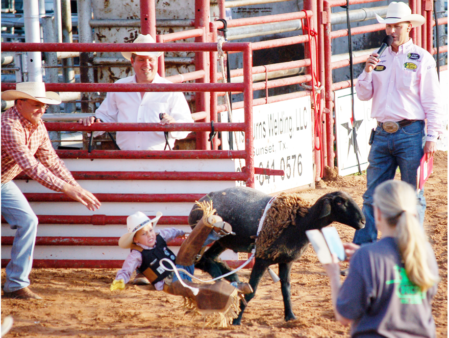 A boy falls off a sheep during mutton busting, which opened Saturday's performance at the Jim Bowie Days rodeo.