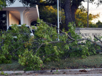 Fallen limbs in front of the Bowie Library.